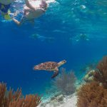 Sea Cow Bonaire