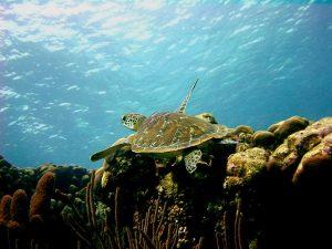 mangrove center