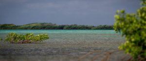 mangrove cen