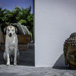 Pure36 P30 buddha